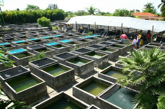 Farm Pond Apartments