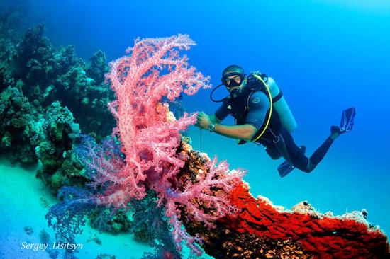 Dive Hurghada - 2020 All You Need to Know BEFORE You Go (with Photos) -  Tripadvisor