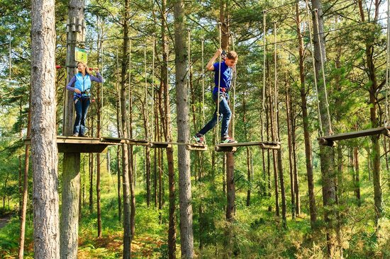 The forest research alice holt research station is located in the centre of the forest (national grid reference su 813427). The 10 Best Things To Do Near Alice Holt Forest Farnham Tripadvisor