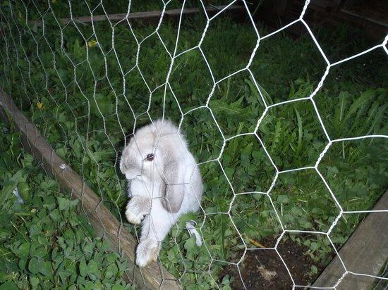 Cute Bunny Picture Of Foragers Pemberton Tripadvisor