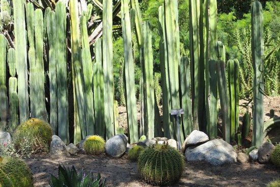 desert japanese garden Japanese Garden - Picture of The Huntington Desert Garden