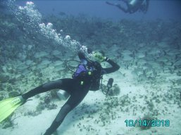 scuba diving playa del carmen forum