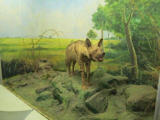 wildlife museums