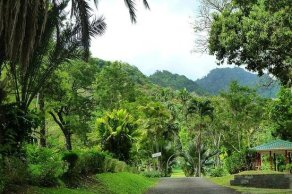 Image result for nature country of st.vincent and the grenadines