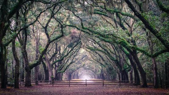 Wormsloe Historic Site Savannah GA What You Need To Know With Photos TripAdvisor