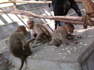 Image result for photos of sree theerthagirishwarar  in dharmapuri