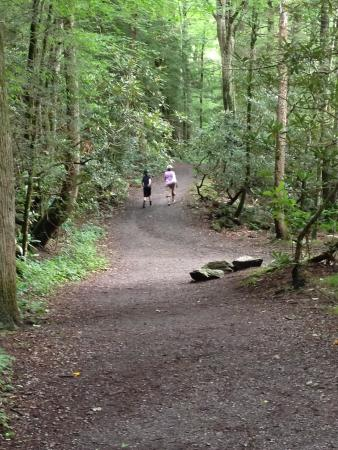 Fighting creek nature trail · 3. Gatlinburg Trail Picture Of Gatlinburg Trail Great Smoky Mountains National Park Tripadvisor