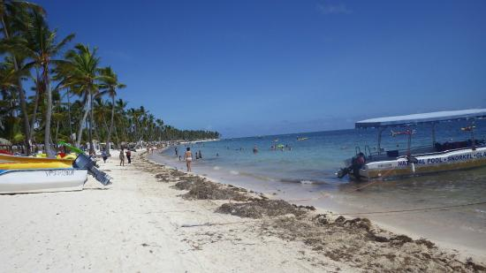 Plage et algues Picture of Be Live Collection Punta Cana