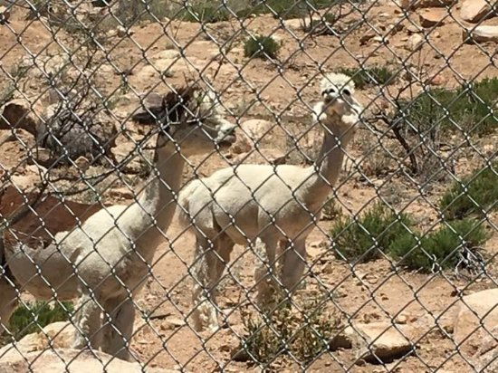 Type Of Llama Picture Of Keepers Of The Wild Nature Park