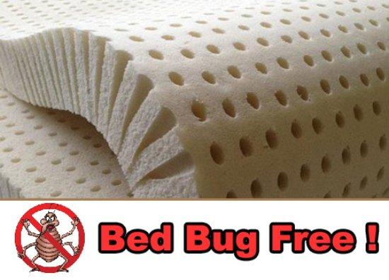 Downbelow Adventure Lodge 100 Latex Mattresses Bed Bug Free