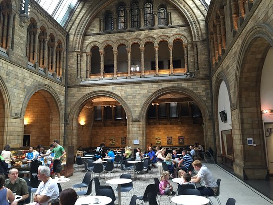 Dining area at the Natural History Museum's Central Café