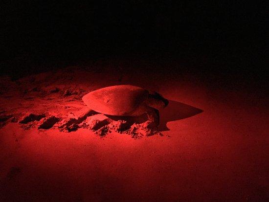 Resultado de imagen de turtle watch rekawa