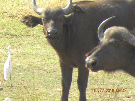 Warthogs Bush Camp 2018 Reviews Kariba Zimbabwe