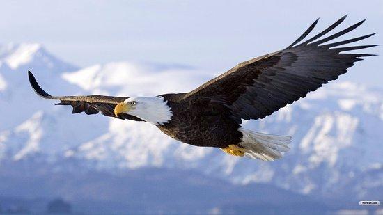 Resultado de imagen de eagles fly