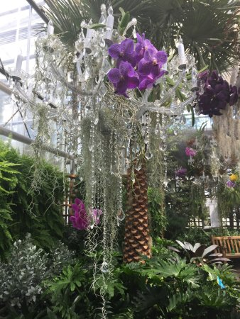 Atlanta Botanical Garden Orchids And Antique Chandeliers