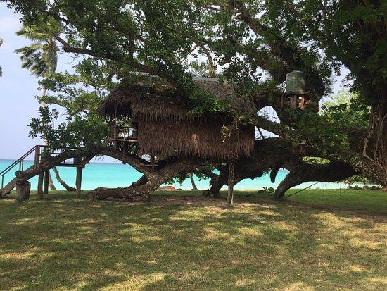 PORT OLRY TREE HOUSE 2019 Reviews Vanuatu Espiritu