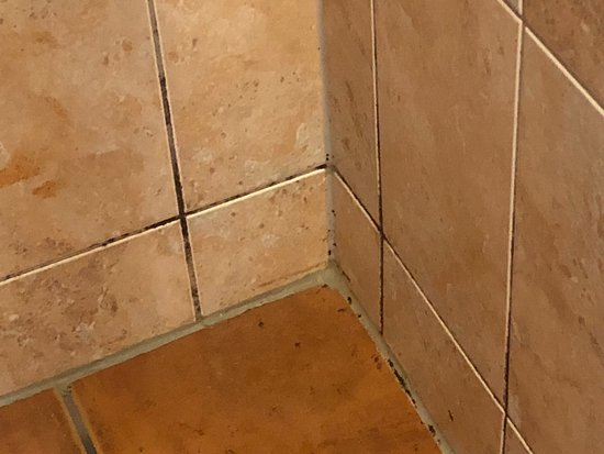 bathroom tiles were filled with mold