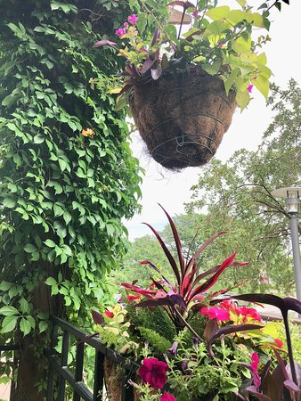 hanging plants and vines on patio