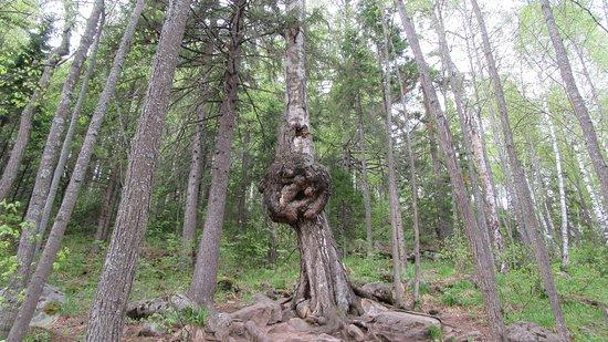 """Национальный Парк """"Таганай"""", Златоуст: лучшие советы перед ..."""