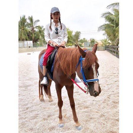 Al Forsan Horse Riding Salalah 2019 All You Need To