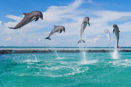 Resultado de imagen para Dolphin Island Park