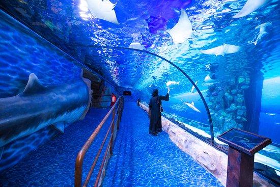 Dubai Aquarium & Underwater Zoo - ATUALIZADO 2020 O que saber antes de ir - Sobre o que as pessoas estão falando - Tripadvisor