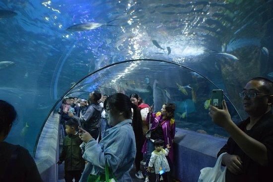 Nanjing Underwater World - 南京市南京海底世界的圖片 - TripAdvisor