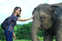 Half Day: Elephant Experience at...