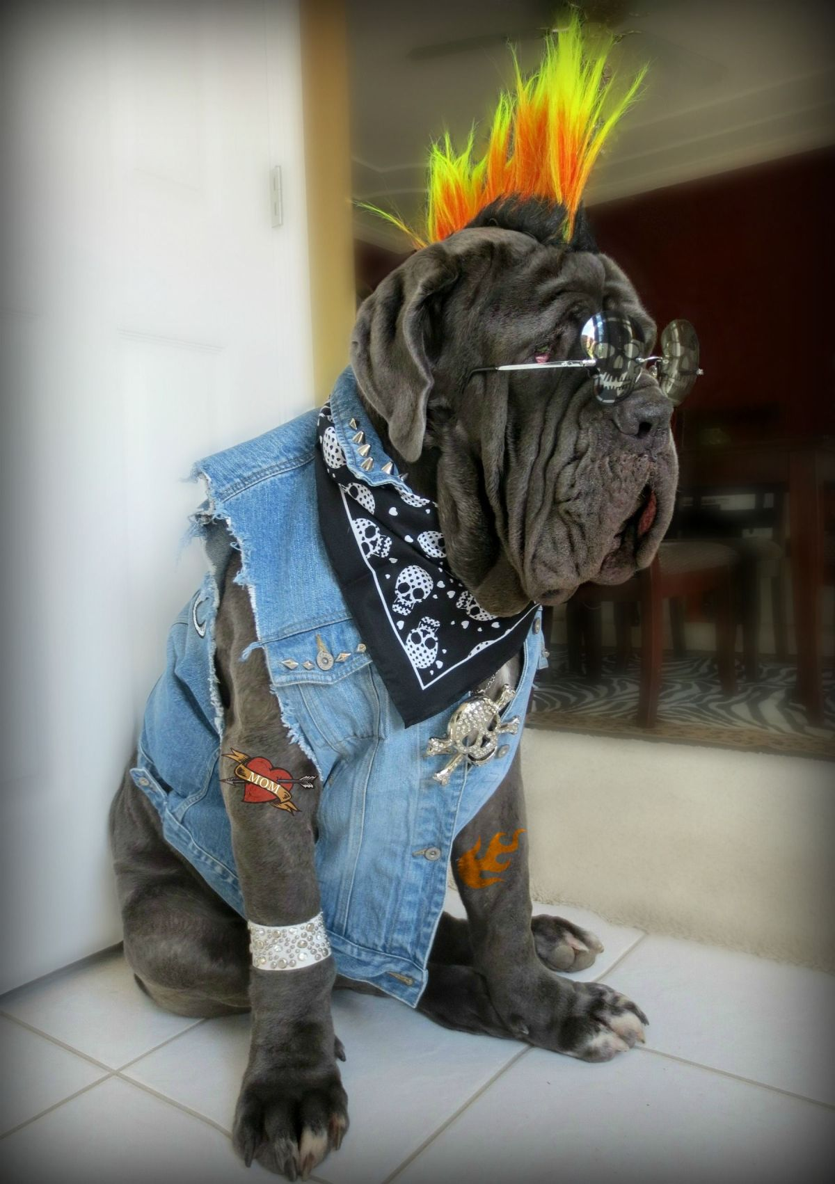Halloween Costumes Your Dog Won't Hate (Too Much)