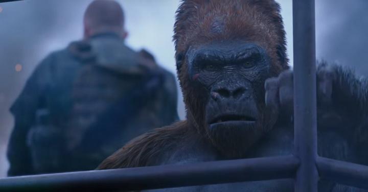 Apes War 4