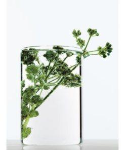 L'Oreal Paris Botanicals Strength Cure balsam pentru par deteriorat