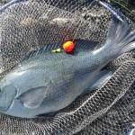 メジナ釣りやチヌ釣りの磯でのトラブルを回避する!