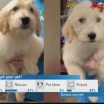 Dognapped Macon Golden Doodles Returned To Pet Store 13wmaz Com