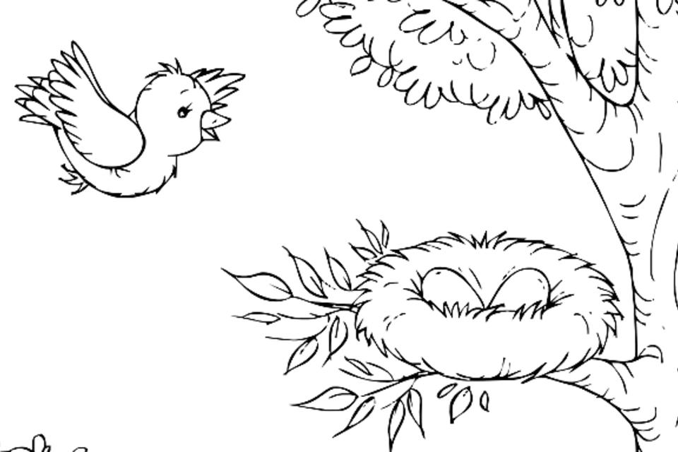 Bird Coloring Pages For Kids Fun Printable Coloring Pages Of Our Feathered Friends Printables 30seconds Mom