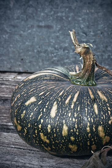 surprise pumpkin on 365 Project