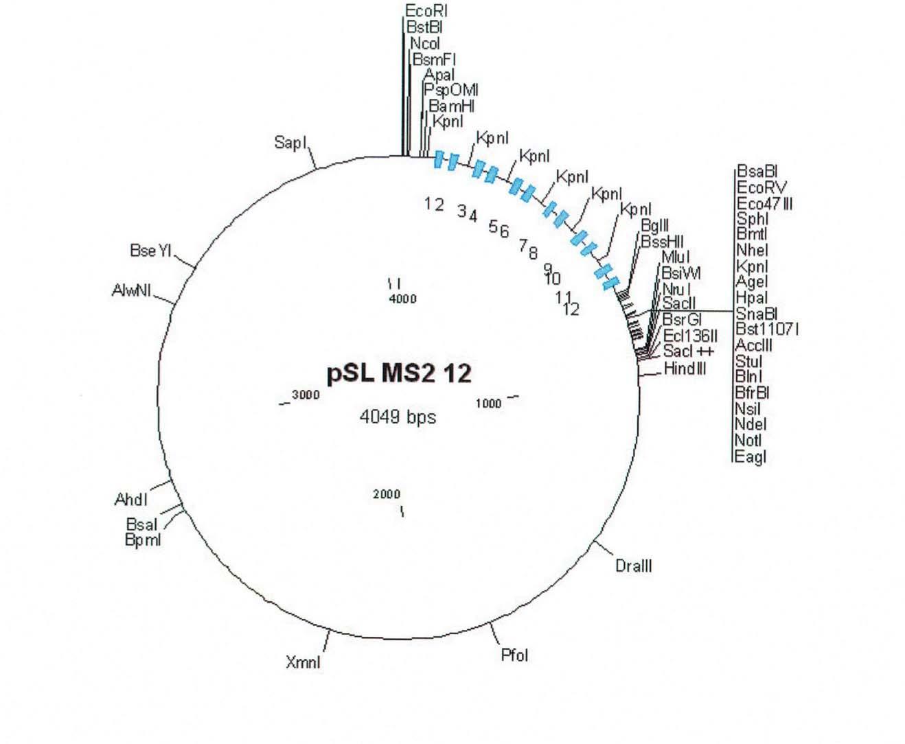 Addgene Psl Ms2 12x