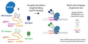 Addgene: CRISPR Guide