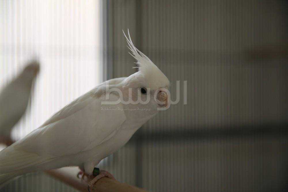 بالصور الشابة فاطمة عباس تنافس الرجال بتربية الطيور