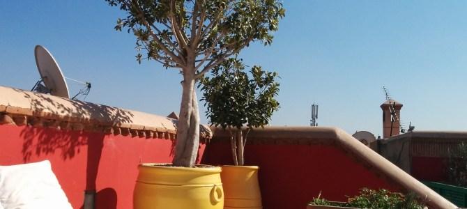Ett eget palats i Marrakech