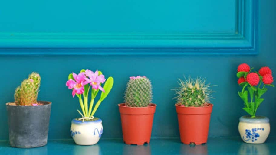 Houseplants On A Budget 5 Cheap And Easy Options Angie S List