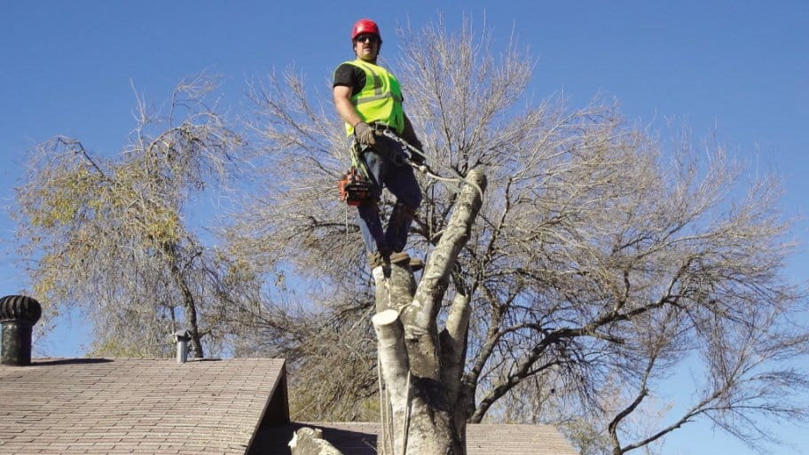 Tree Services Removal And Trimming Angies List