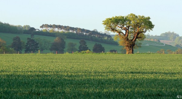 capability brown english landscape gardens Capability Brown: Landscape Designer Behind England's Most