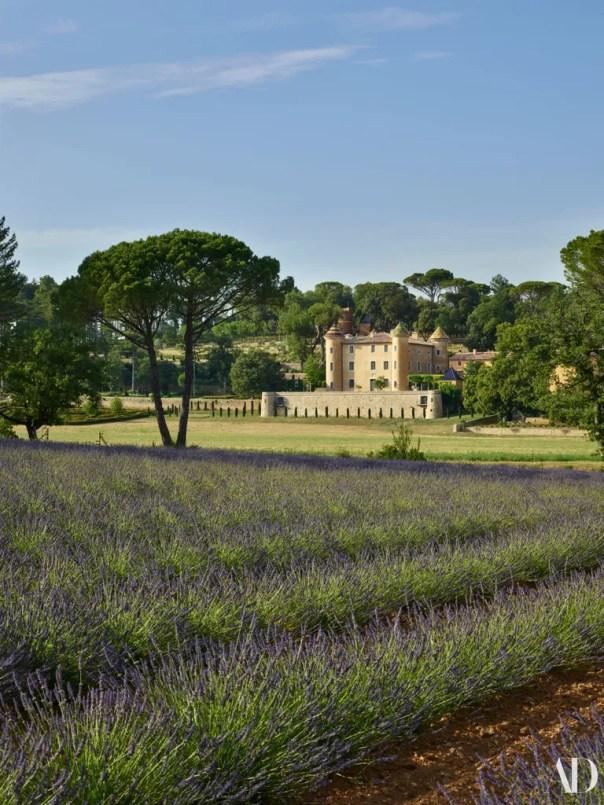 Lavender in the garden.