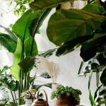 The Best Indoor Plants For Creating Good Feng Shui Architectural Digest