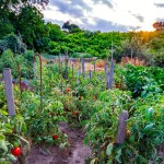 Growing A Vegetable Garden Might Be Just What You Need During The Coronavirus Crisis Architectural Digest