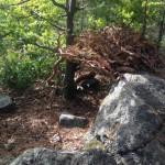 förskolan skog