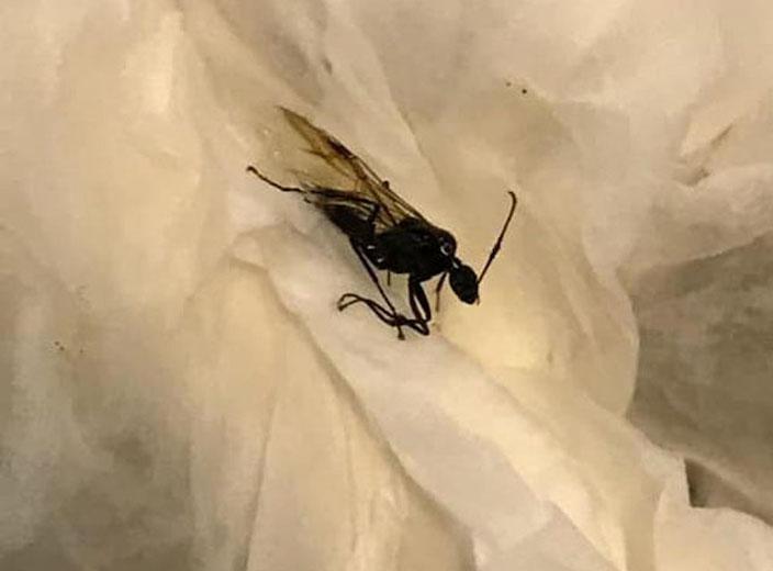 潮濕春季小昆蟲現身 教你自製7種天然驅蟲劑 | 生活事 | 巴士的報