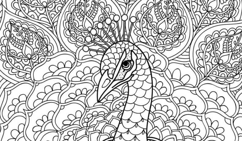 målarbilder, målarbild, gratis målarbilder, gratis målarbild, målarbok, målarböcker, målarbok för vuxna, målarböcker för vuxna, zentangle, mandala, mindfulness, måla, färglägga, mindfullness, doodle, bättre hälsa, bra hälsa, djur, fågel, fåglar, påfågel, påfåglar, påfågelfjäder, påfågelfjädrar, fjäder, fjädrar