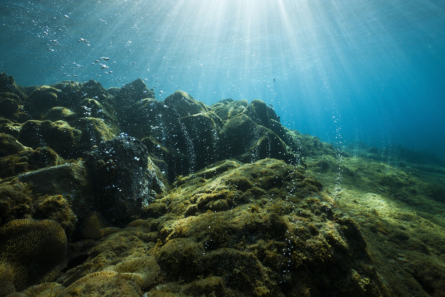 Oxygen Levels In Oceans Are Dropping Dangerously