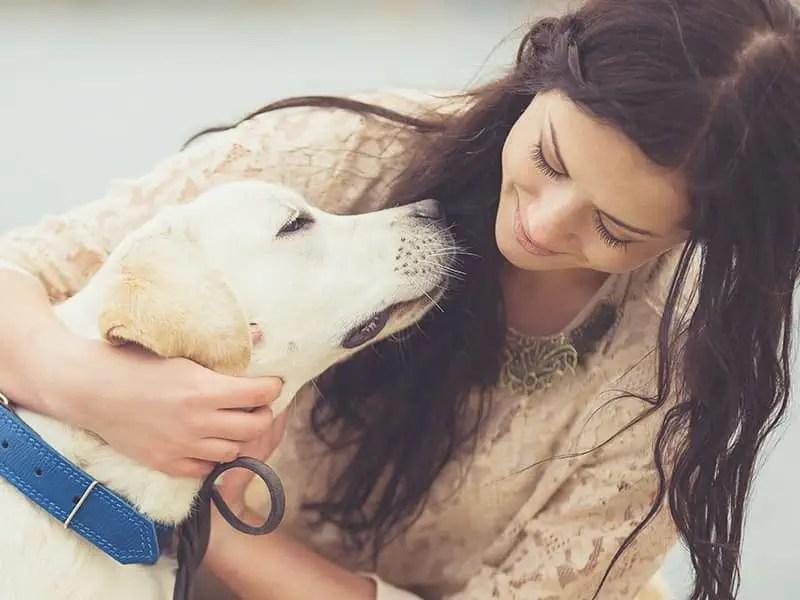 5 Dogs Who Are Heroes Heroic Pets Beliefnet